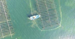 Vista aerea di una barca in un campo dell'ostrica archivi video