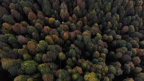 Vista aerea di una cabina di funivia con la foresta di autunno qui sotto Foresta gialla e verde con la teleferica sulla cima video d archivio