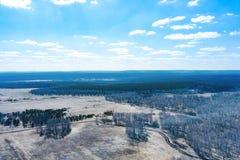Vista aerea di una foresta con le betulle bianche senza foglie, gli alberi verdi coniferi nella distanza e un campo per piantare fotografia stock libera da diritti