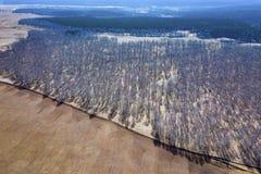 Vista aerea di una foresta con le betulle bianche senza foglie, gli alberi verdi coniferi nella distanza e un campo per piantare immagini stock libere da diritti