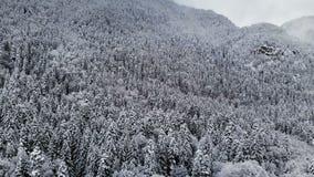 Vista aerea di una foresta di panorama in un giorno nuvoloso di inverno Bella natura di inverno dell'abete rosso e pino nella nev video d archivio
