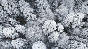 Vista aerea di una foresta in un giorno nuvoloso di inverno Bella natura di inverno dell'abete rosso e pino nella neve Sorvolare archivi video