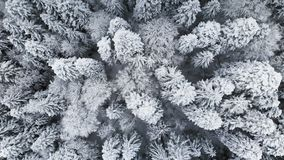 Vista aerea di una foresta in un giorno nuvoloso di inverno Bella natura di inverno dell'abete rosso e pino nella neve Sorvolare video d archivio