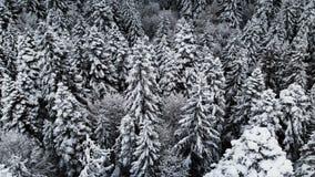 Vista aerea di una foresta in un giorno nuvoloso di inverno Bella natura di inverno dell'abete rosso e pino nella neve Sorvolare stock footage