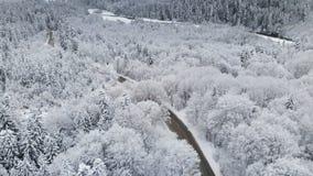 Vista aerea di una strada in una foresta di inverno un giorno nuvoloso Una bella strada di inverno fra la natura dell'abete rosso archivi video