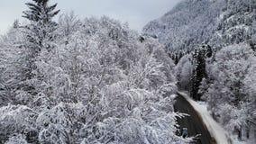 Vista aerea di una strada in una foresta di inverno un giorno nuvoloso Una bella strada di inverno fra la natura dell'abete rosso stock footage