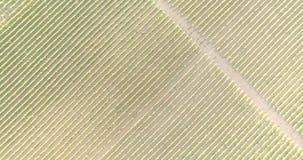 Vista aerea di una vigna video d archivio