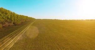 vista aerea 4k Volo basso sopra il giacimento rurale del grano verde e giallo Fotografia Stock