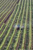 Vista aerea nel suo agricoltore di vino lavorante della vigna Fotografia Stock