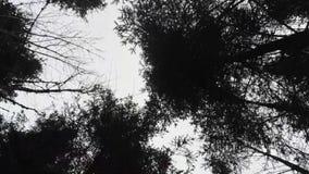 Vista aerea sopra le cime dell'albero nella stagione invernale in Baviera video d archivio