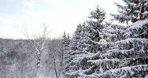 Vista aerea sopra una foresta nevosa coperta di neve Sorvoli l'abete nevoso congelato e la foresta spessa della foresta dei pini  archivi video