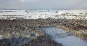 Vista aerea sopra una foresta nevosa coperta di neve vicino alle costruzioni della campagna Sorvoli l'abete ed i pini nevosi cong archivi video