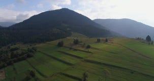Vista aerea: Sorvolare un bello campo nelle montagne carpatiche vicino alla città Mizhgirja video d archivio