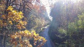 Vista aerea sui rami nel fogliame di giallo di autunno con la strada video d archivio