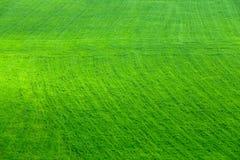 Vista aerea sul campo verde di agricoltura Immagine Stock