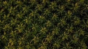 Vista aerea sulla piantagione dei cocchi Fotografie Stock Libere da Diritti