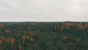 Vista aerea superiore Costa del Mar Baltico un giorno nuvoloso di autunno stock footage