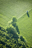Vista aerea: Un albero isolato in un campo Immagini Stock
