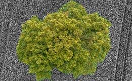 Vista aerea verticale, albero verde su un campo in bianco e nero, ABS Fotografie Stock