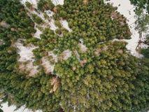 Vista aerea verticale di un più forrest bavarese in Germania immagine stock libera da diritti