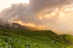 Vista agradável com primeiro plano da couve na icebergue da aba de Phu fotografia de stock royalty free