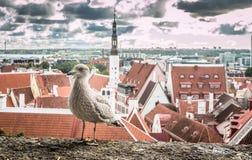 Vista agradável da cidade velha de Tallinn Estônia Fotos de Stock