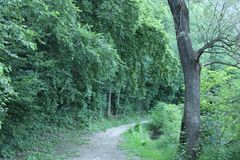 Vista agradável de uma estrada de floresta fotos de stock