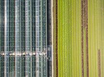 Vista agricola aerea del campo e del greenho di produzione della lattuga Fotografia Stock