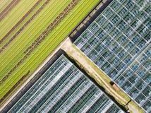 Vista agricola aerea del campo e del greenho di produzione della lattuga Fotografia Stock Libera da Diritti