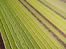 Vista agricola aerea del campo e del greenho di produzione della lattuga Fotografie Stock