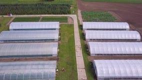 Vista agricola aerea del campo e della serra di produzione della lattuga clip Vista superiore della serra Immagine Stock