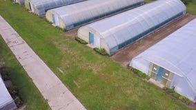 Vista agricola aerea del campo e della serra di produzione della lattuga clip Vista superiore della serra Fotografia Stock