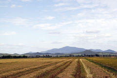 Vista of an agricultural land. Stock Image