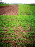 Vista agricultural Olhar artístico em cores vívidas do vintage Fotografia de Stock Royalty Free