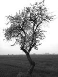 Vista agricultural Olhar artístico em preto e branco Fotografia de Stock