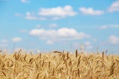 Vista al giacimento di grano fotografia stock