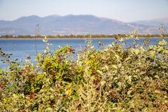 Vista al lago Kerkini con i rovi nella priorità alta ed in una catena montuosa nei precedenti Immagini Stock