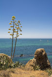 Vista al mar de la orilla Fotos de archivo libres de regalías
