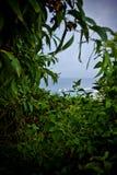 Vista al mar a través del verdor tropical enorme Fotografía de archivo libre de regalías