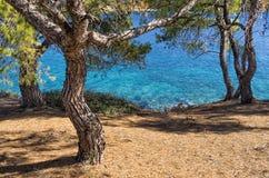 Vista al mare attraverso gli alberi Immagine Stock