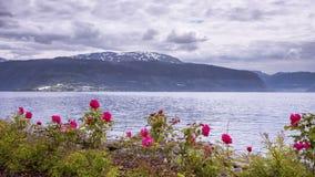 Vista al rallentatore su Vangsnes in Norvegia archivi video