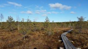 Vista alla foresta sulle paludi Fotografia Stock