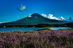 Vista alla lavanda del monte Fuji di estate con cielo blu e le nuvole w fotografie stock