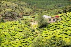 Vista alla piantagione di tè con poche case fra le colline Immagine Stock