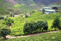 Vista alla piantagione di tè con poche case fra le colline Fotografia Stock