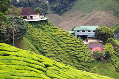 Vista alla piantagione di tè con poche case fra le colline Fotografie Stock Libere da Diritti