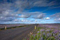 Vista alle pianure islandesi durante l'estate Fotografia Stock
