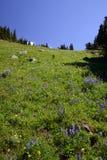 Vista alpina Immagine Stock