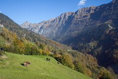 Vista alpina Immagine Stock Libera da Diritti