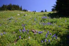 Vista alpina della montagna Immagini Stock